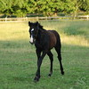Foal Running Photo