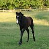 Foal Running Photo