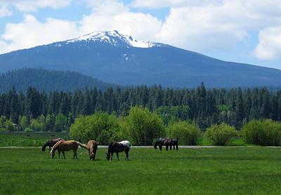 horses-spring_4679