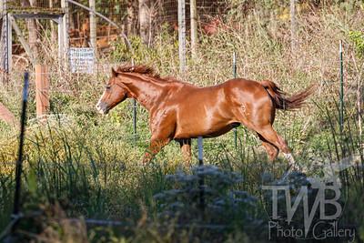 TWBPhotoGallery-2863
