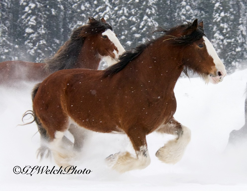 Belgium's Running in the Snow
