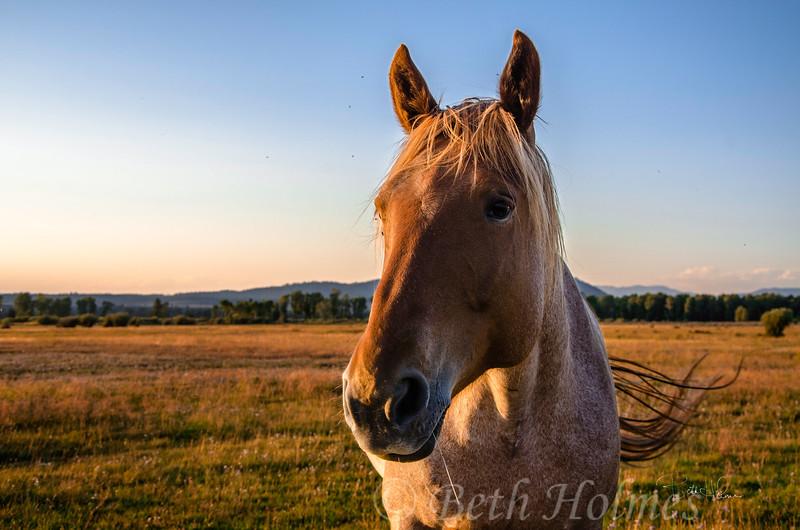 Horse Hello