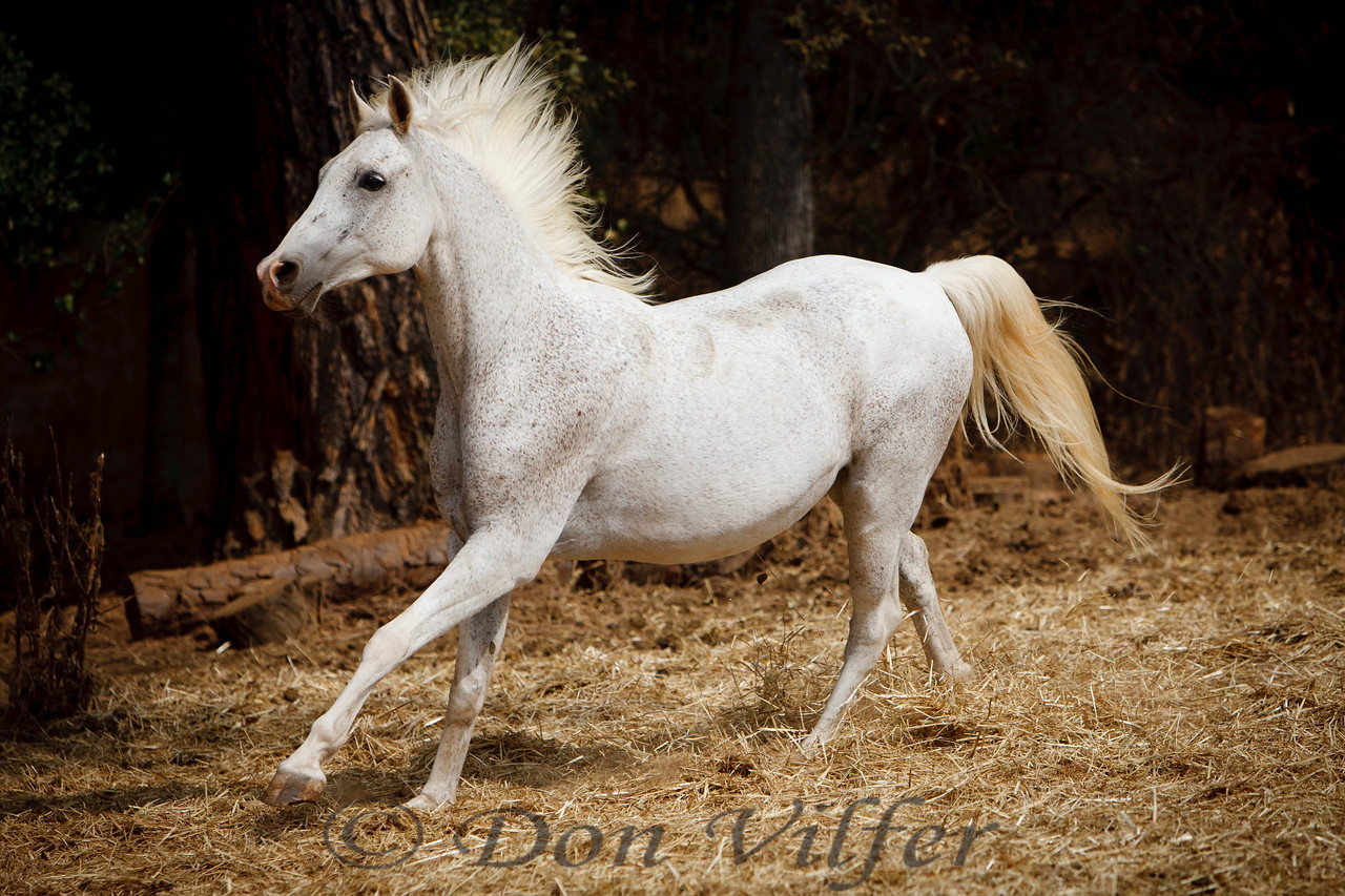 The ever photogenic Ziggy from the All About Equine horse rescue near Sacramento, California.