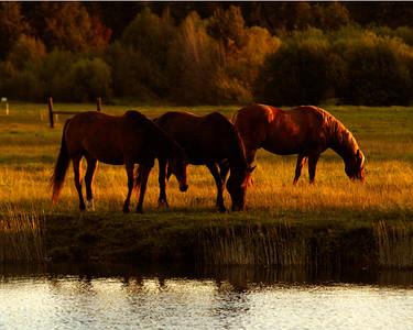 BBR-horses-in-sunlight-KateThomasKeown- IMG_3843