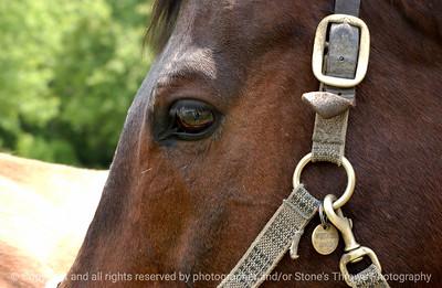 015-horse-dsm-25May03-q