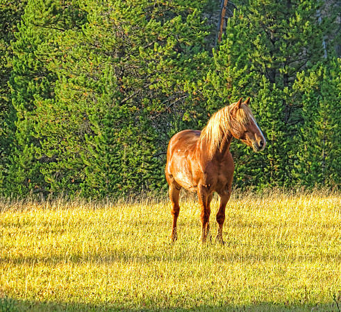 """Sept 30 - Golden horse<br /> <br /> Thanks for the comments on my """"L"""" is for light image yesterday."""