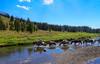 Stream Crossing in the Teton Wilderness