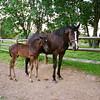 Horse Colt Picture