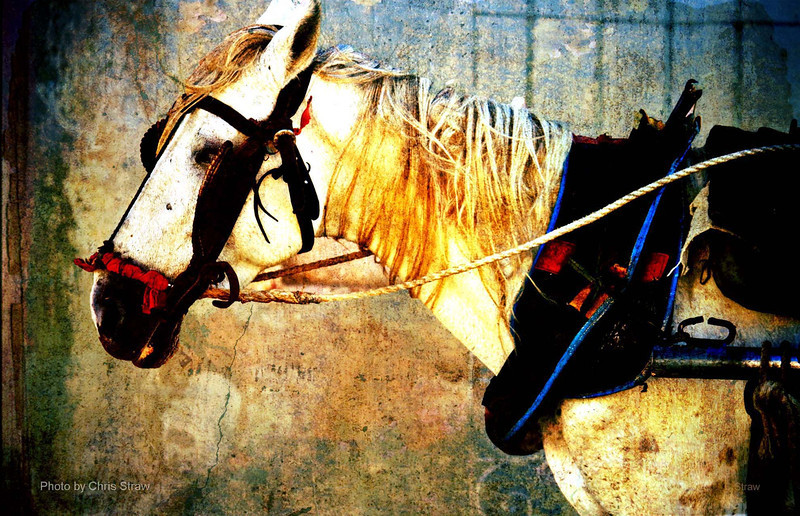 Cuban Pony