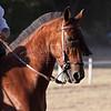 Un cavallo vaquero