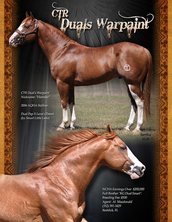 HORSES FOR SALE - STUD - QH & Paint Types