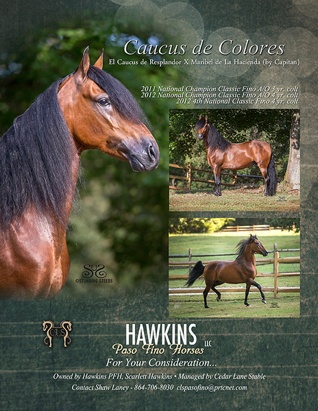 CAUCUS DE COLORES - Paso Fino Horse for sale