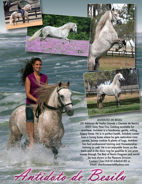 THIS HORSE IS SOLD