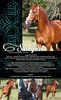 SACRIFICIO DEL PACIFICO<br /> Offered For Purchase<br /> CLICK HERE TO WATCH ONLINE VIDEO<br /> <br /> PFHA Registration #52,525<br /> Sacrificio del Pacifico is a Handsome Shiny Chestnut 2008 Performance Gelding with flaxen mane and tail. His gentle and loving disposition makes him a great horse for the intermediate and beginner riders. Champion in the Pleasure division (over 464 show points).<br /> <br /> Sire: Profeta Segundo de Besilu (Reserve World Cup Fino Stallion) by Profeta de Besilu (Grand National Champion and World Cup Champion Classic Fino Stallion), out of Manuela del Conde by Capuchino  (Grand National Champion and World Cup Champion Classic Fino Stallion)<br /> <br /> Dam: Guanera by Simbolo de Besilu (Grand National Champion and World Cup Champion Classic Fino  Stallion), out of La Cafetera by Andante de Besilu<br /> (4 times Reserve National Champion Classic Fino Stallion).<br /> <br /> Contact<br /> 407.402.2528<br /> delzorro1@mac.com