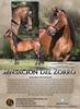 Sensacion del Zorro - Paso Fino mare for sale