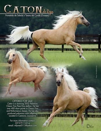 HORSES FOR SALE - Paso Finos - Trocha - Trote y Galope