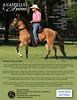 """A CAPPELLA'S ANIME<br /> Adorno de la Luisa x Linosina del Libano<br />  <br /> 2012 National Champion Classic Fino 4yr Schooling FillyAnime is a beautiful buckskin filly with primitive markings, black mane and tail, and black points. She has an easy disposition, and exceptional bloodlines. She is very calm under saddle, in the barn, and on the ground. Anime will walk all day if asked and is suitable for confident advanced beginner riders. She has a beautiful high and natural headset and is very flashy! <br />  <br />  She stands for the farrier and vet, trailers well, and has never had any health issues. She takes medicines and shots well, stands perfectly still when being worked with and is ridden regularly 5 days a week by her trainer. She has never been shown, but almost every horse in the top line of her pedigree was retired as a National or World Champion and/or a proven producer.  <br />  <br /> She has a firm understanding of the training basics. She is easy to catch and has great ground manners. She is very willing to learn and understands what the rider wants from her. She is a very easy horse to understand and a lot of fun for her rider. <br />  <br /> With her natural mechanics and a little more work, Anime could easily transition into a show quality filly for anyone interested. She is low in the front and has great hocks. She naturally works under herself. She has beautiful conformation, accompanied by a gorgeous neck that gives her a nice, natural headset. This pretty girl is a real steal at only $2,750.00!<br /> <br />  VIDEO:  <a href=""""http://www.youtube.com/watch?v=9EZ-sgS2zBg&feature=youtu.be"""">http://www.youtube.com/watch?v=9EZ-sgS2zBg&feature=youtu.be</a> <br />  <br /> Owned by: Kristi Smith Managed by: <br /> United Paso Fino Show Horses<br /> Summerfield, FL <br /> Edgar and Alei Ortiz <br /> 352-307-0544 office<br /> 352-427-0242 cell <br /> unitedpasofino@earthlink.net"""