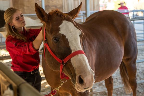 HorsesHelp.org Benefit 2 November 2013