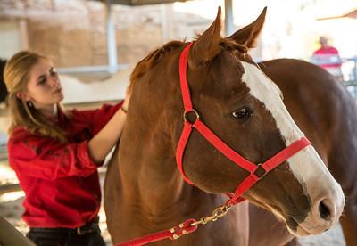 HorsesHelp org Benefit 2 November 2013 -004
