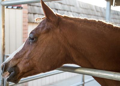 HorsesHelp org Benefit 2 November 2013 -007