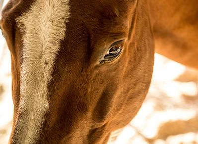 HorsesHelp org Benefit 2 November 2013 -001