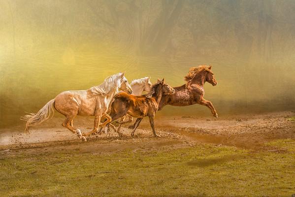 Horses I Love