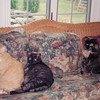 Sandy (left), Blackie and Cindy.