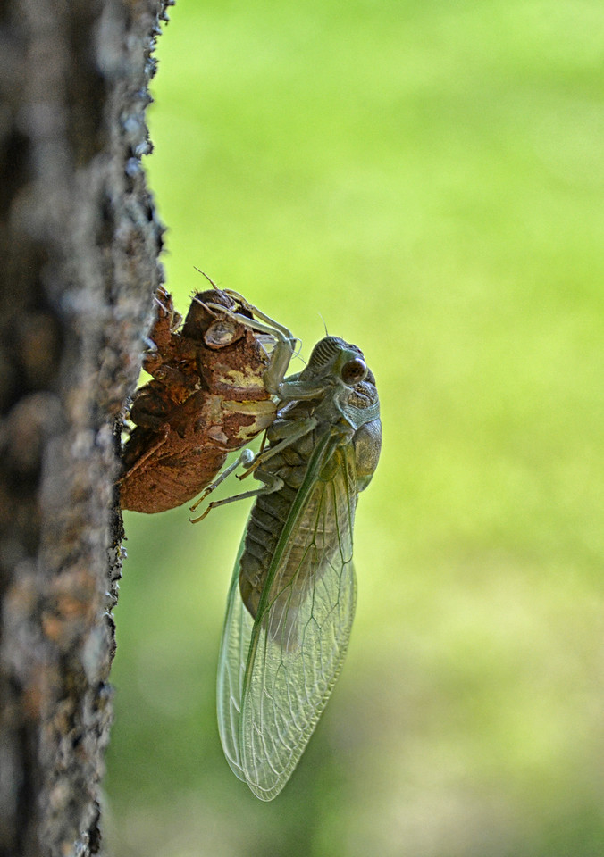 Cicada Emerging Photographer Theresa A  Smith