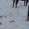 Illianna Snow 2015