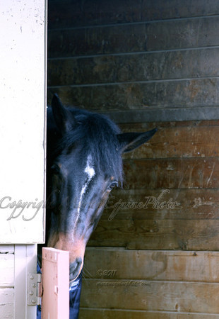 mep2818Ravel-barn-web copy copy