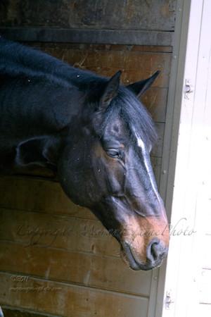 mep2825ravel-barn-web copy copy