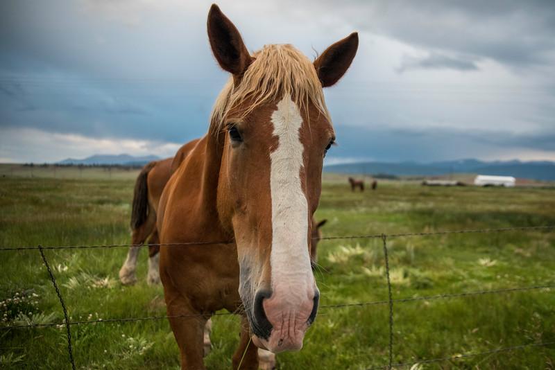horsies2017
