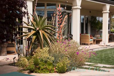 Aloe vaombe - Cistanthe grandiflora 'Jazz Time' - Aeonium - Aloe - Mediterranean landscaped porch setting_0837