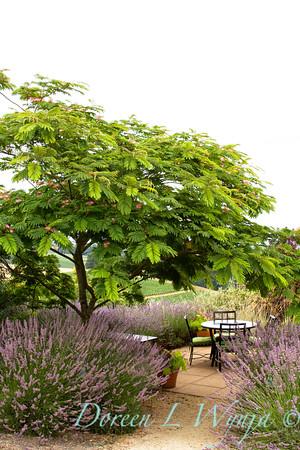 Albizia julibrissin Rosea - lavender - patio setting