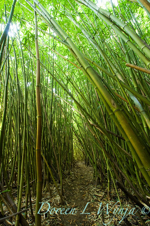 Bamboo Forest_013