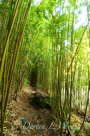 Bamboo Forest_018