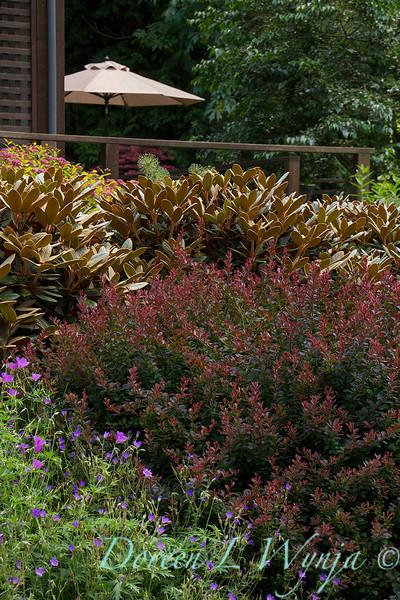 Berberis thunbergii Crimson Pygmy - Geranium Nimbus - Rhododendron Cinnamon Bear_2363