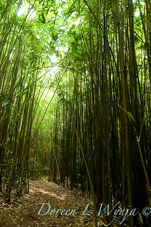 Bamboo Forest_002