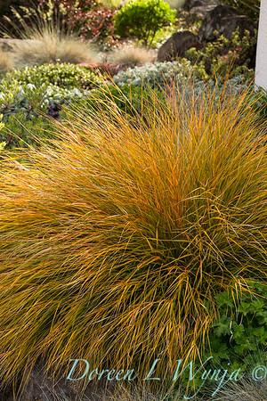 Carex testacea_2398