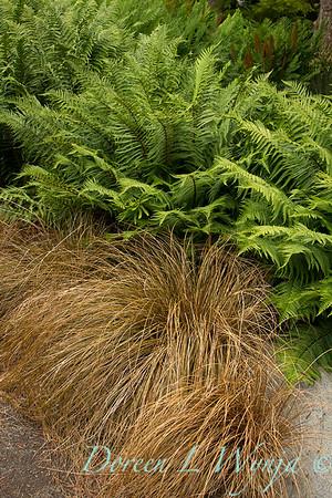 Carex flagillifera_030