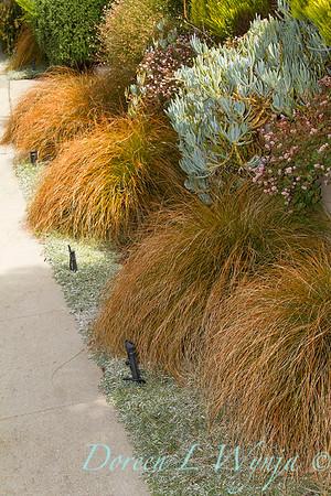 Carex testacea orange New Zealand sedge_6810
