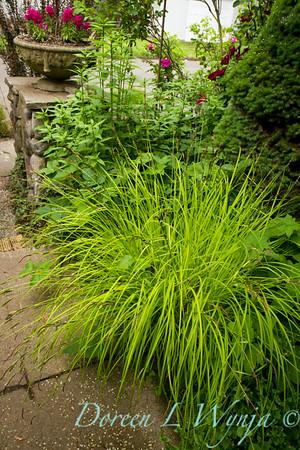 Carex elata Bowles Golden_013