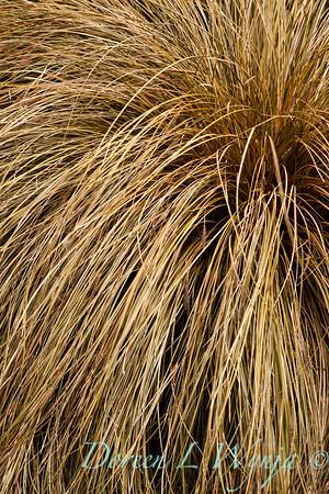 Carex flagellifera_003