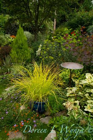 Carex elata Bowles Golden_012