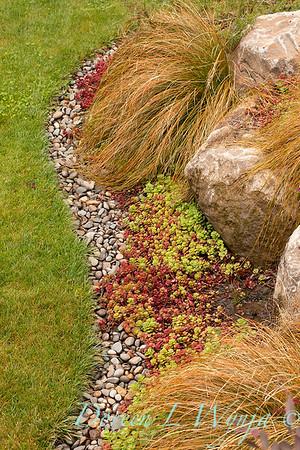 Carex testacea - Sedum spurium 'John Creech' - rock border_1218