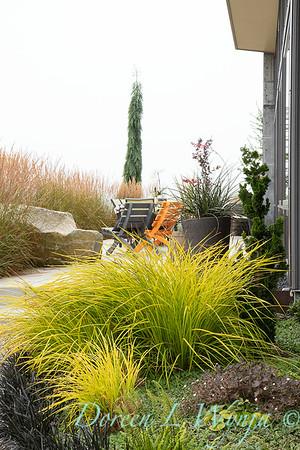 Carex elata 'Aurea' landscape patio_1071