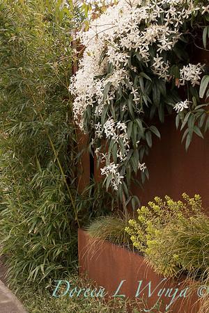 Clematis armandii - Euphorbia x martinii 'Ascot Rainbow'_2184