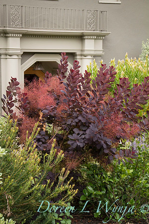 Cotinus coggygria 'Royal Purple' - Gardenia jasminoides - Leucadendron_1021