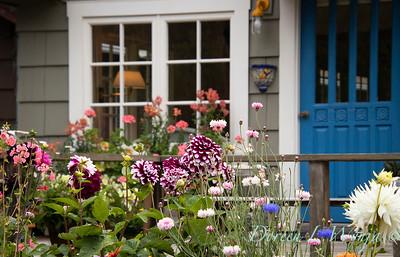 cottage garden - Dahlia_3509