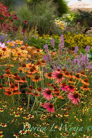 Echinacea 'Dixie Blaze' - Agastache 'Blue Boa' - Cottage Garden_2048